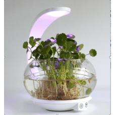 Светильник-аквариум с фито-лампой Модерн 5-4946-WH LED